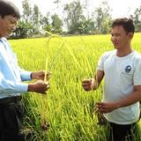 NHNN cho vay thí điểm mô hình liên kết trong nông nghiệp