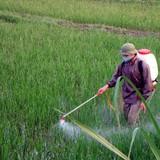 17 lô hàng thực phẩm nhập khẩu từ Trung Quốc có dư lượng thuốc bảo vệ thực vật