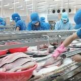 Nga vẫn đóng cửa với cá tra Việt Nam
