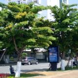 Đà Nẵng quản lý cây xanh bằng bản đồ điện tử