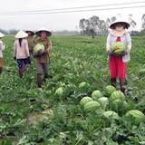 Trung Quốc hạn chế doanh nghiệp nhập khẩu dưa