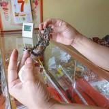 Lật tẩy chiêu trò tinh vi buôn bán đồ trang sức giả