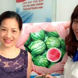 NCB mua 5 tấn dưa hấu tặng khách hàng tại Hà Nội