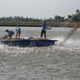 Nông dân đi Tây tiếp thị cá tra