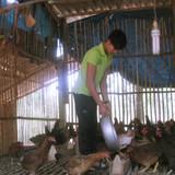 Kinh nghiệm kiếm 300 triệu một năm của vợ chồng nông dân trẻ
