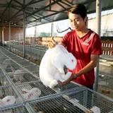 Công tử 9x nuôi thỏ thu tiền tỷ