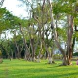Đà Nẵng: Mở rộng Công viên 29/3 thêm 6.000m2