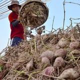 Các doanh nghiệp sản xuất lớn của Ấn Độ đến Việt Nam