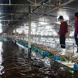 Đầu tư hơn 1.000 tỷ đồng nuôi tôm công nghệ cao ở Bình Định