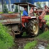 """""""Ông lớn"""" TPP có thực sự đáng sợ với ngành chăn nuôi?"""