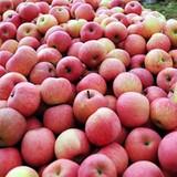 Kiểm soát chặt táo đỏ Phú Sỹ có bao bì vi phạm pháp luật Việt Nam
