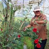Đổi đời nhờ trồng hoa công nghệ cao