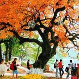 Hà Nội, TP.HCM lọt top 10 điểm du lịch có chi phí hợp lý nhất năm 2016