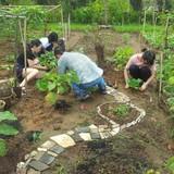 Đầu tư nông trại cho thuê giữa phố nhà giàu Sài Gòn