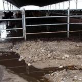Gây ô nhiễm, Công ty Chăn nuôi Gia Lai bị phạt 400 triệu đồng