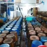 Hai công ty vàng xin bán 60 tấn cyanua giả