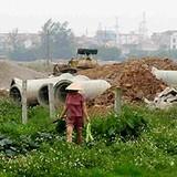 Hà Nội: Chuyển đổi gần 1.000 ha đất lúa sang đất dự án năm 2016