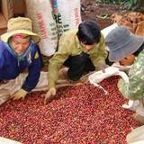 """Dân """"găm"""" cà phê, doanh nghiệp thiếu hàng xuất khẩu"""