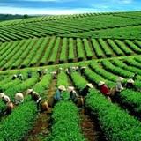 Nông sản, nông nghiệp Việt trong mắt người Nhật