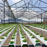 Đổ tiền vào nông nghiệp công nghệ cao: Cuộc chơi chỉ dành cho ông lớn?