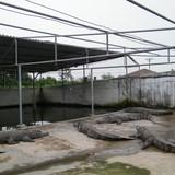 Người từ chối bán 50.000 cá sấu cho Trung Quốc