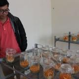 Kỹ sư IT bỏ Sài Gòn lên Đà Lạt làm nhộng trùng thảo