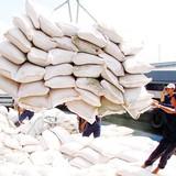 Giá gạo tăng do hoạt động đầu cơ