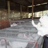 Tự tạo cơ hội: Kỹ sư cơ khí nuôi thỏ lai