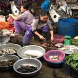 Đại nạn cá chết, hậu quả lan ra đến Hà Nội