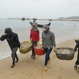 Chính phủ hỗ trợ khẩn cấp người dân thiệt hại do hải sản chết bất thường