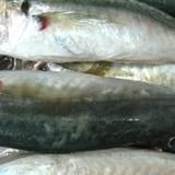 Chất cực độc có trong 30 tấn cá nục đông lạnh ở Quảng Trị là gì?
