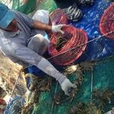 Bàng hoàng 12 tấn tôm hùm lăn đùng ra chết, thiệt hại 20 tỷ