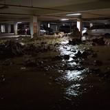 Hàng chục xe máy bị vùi lấp vì bùn đất tràn vào chung cư