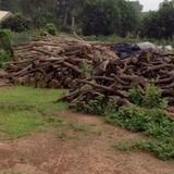 Dự án nghĩa trang Liên Đài Viên bị ngăn cản: Không thể để tiền lệ xấu