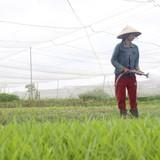 Ra ngoại ô Sài Gòn mở trang trại thuê đất trồng rau