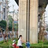 Hà Nội trồng cây dưới gầm đường sắt trên cao