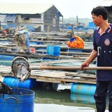 Vụ dân Vũng Tàu chặn quốc lộ: 65 tấn cá chết, thiệt hại 6,4 tỷ