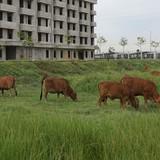 Khu nhà ở công nhân hơn trăm tỷ bỏ hoang