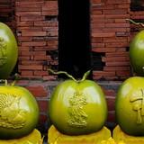 """Dừa """"Song Kê"""" giá tiền triệu mỗi trái"""