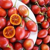 Cà chua 500.000 đồng một cây giống, cả triệu đồng mỗi kg quả