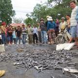 Dân đổ cá chết phản đối xáng cạp, gây tắc quốc lộ