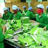 Đài Loan kêu trời vì chè Việt Nam chứa thuốc bảo vệ thực vật