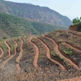 Góp đất trồng cao su: Thu nhập ngày càng ít