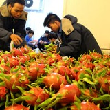 Tìm đầu ra cho trái cây: Phải xóa mù thông tin