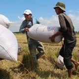 Bán gạo cho Trung Quốc vẫn gặp khó