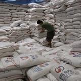 Philippines mời Việt Nam đấu thầu cung cấp 250.000 tấn gạo