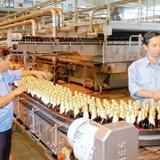 Vấn nạn bia lậu, bia giả: Dán tem nhằm tăng cường công tác quản lý