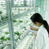 Khu kinh tế Dung Quất sản xuất nông nghiệp ứng dụng công nghệ cao