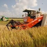 Không để gạo Việt mãi vô danh