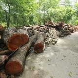 Bãi tập kết gỗ khổng lồ sau trận siêu dông ở Hà Nội